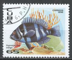 Cuba 1996. Scott #3753 (U) Fauna Of The Caribbean, Hypoplectrus Indigo, Fish * - Cuba