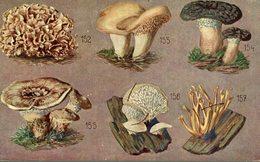 Künstler-AK Essbare Und Giftige Pilze  KRAUS GLUCKE SEMMEL STOPPELPILZ FUNGHI CHAMPIGNONS PILZE MUSHROOMS SETAS - Funghi