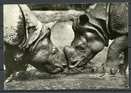 Deutschland 2000 Postkarte PANZERNASHORN (gesendet Nach Estland, Mit Briefmarke) - Rhinocéros