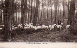 88Sv  33 Landiras Pinguet Troupeau De Moutons Et Berger - France