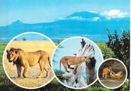 ** Lot Of/de 13 Postcards/cartes ** KENYA / Animals Tiere Dieren Animali - CPSM CPM GF - AFRIQUE NOIRE Black Africa - Kenya