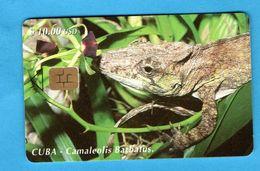 CUBA  Chip Phonecard - Cuba