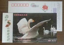 Whistling Swan,IUCN Red List Of Endangered Species,CN07 Dongting Lake Wetland Wildlife Bird Pre-stamped Card - Swans