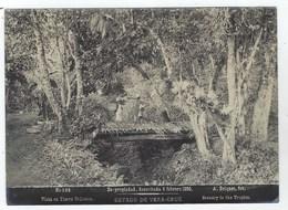 MEXICO - Estado De VERA-CRUZ - Vista En Tierra Caliente - 1896 - Photo Albuminée De Abel Briquet - Fotos