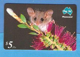 AUSTRALIA  Magnetic Phonecard  MINT - Australia