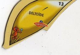 Magnets Magnet Le Gaulois Anatomie Organe Deltoide - Non Classés