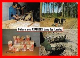 CPSM/gf  (40)  Culture Des Asperges Dans Les Landes, Multivues...H440 - Cultures