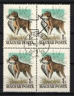 SPECIALS - Hungary 1956. Animals / Dogs ERROR:  Michel: 1464 I. 4-blocks, Used - Abarten Und Kuriositäten