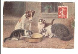 CHATS ET CHIEN AUTOUR D UN PLAT - Cats
