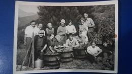 PHOTO ORIGINALE  VENDANGES  13 X 9  ARLES SUR LE TECH - Landbouw