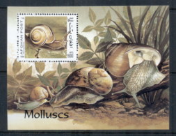 Afghanistan 1999 Seashells MS MUH - Afghanistan