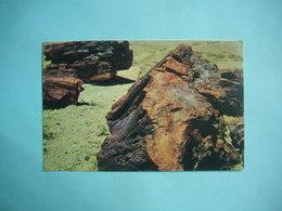 PETRIFIED LOGS  -  Forest National Park  -  ARIZONA  -  Etats Unis - Etats-Unis