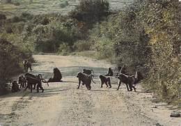 Afrique > Charmes  Africains - Cynocépahles Dog-faced Apes  (genre De Singes) (Editions :EDICA  N°A 321*PRIX  FIXE - Non Classés
