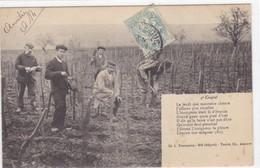 Yonne - Auxerre - La Semaine Du Vigneron 4ème Couplet - Auxerre