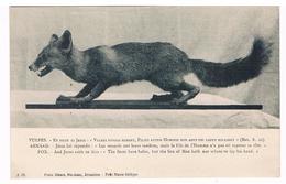 CPA : RENARD - Vulpes - Fox - Fuchs -  Texte En Latin, En Français, En Anglais - Petit Musée Biblique Jérusalem - Animaux & Faune