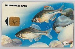 PHONE CARD- COREA DEL SUD (E30.28.1 - Korea, South