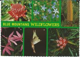 Australia - Blue Mountains Postcard AIR MAIL Via Macedonia.nice Stamp - Australie