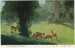 Sacred Deer Of Kasuga - Deer In The Park , Nara - (Japan) - Japan