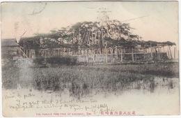 The Famous Pine Tree Of Karasaki, Omi - (Japan) - Undivided Postcard, 1906 - Tokyo To London - Japan