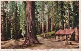 "USA 1905 CARTE POSTALE DE KINGS KANYON  CABIN  AND ""GENERAL GRANT"" TREE - Kings Canyon"