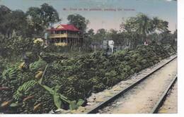 POSTAL DE COSTA RICA DE FRUIT ON THE PLATFORM, AWAITING THE RECEIVER (H. WIMMER) - Costa Rica