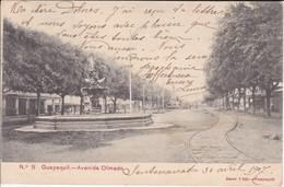 5 POSTAL DE GUAYAQUIL - LA AVENIDA OLMEDO DEL AÑO 1907  (JANER E HIJO) ECUADOR - Ecuador