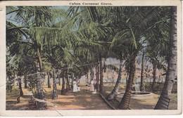 POSTAL DE CUBAN DE COCOANUT GROVE   (CUBA) (SWAN) (rotura) - Cuba