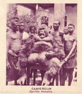 Chromo, Image, Vignette : Cameroun, Gorille Femelle, Singe  (6 Cm Sur 7 Cm) - Unclassified