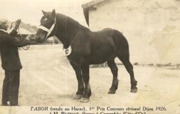 """B 9672 - """" Tabor""""   1er Prix Concours Régional   Dijon (1926)  Vendu A M. Patiriat  Eleveur à Corrombles (21) - Chevaux"""