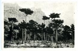 Krim_5, Ukraine, Alupka, Blick Auf  Aj Petri, Ca. 1935 - Russland