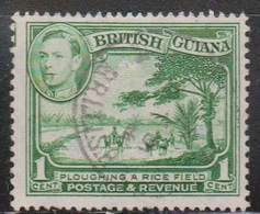 BRITISH GUIANA Scott # 230a Used - KGVI & Plowing Rice Field - British Guiana (...-1966)