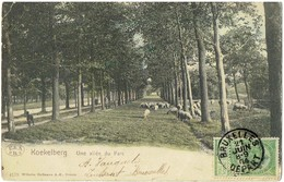 KOEKELBERG - Une Allée Du Parc - Schapen - Moutons - 4170 Wilhelm Hoffmann - Koekelberg