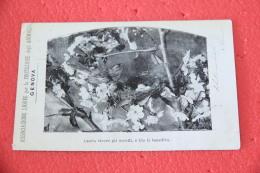 Genova  Cartolina Associazione Ligure Per La Protezione Degli Animali 1902 - Italie