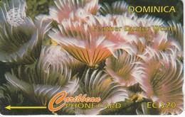 TARJETA DE DOMINICA DE  FEATHER DUSTER  9CDMG  (ANEMONA) - Dominica
