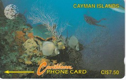 TARJETA DE CAYMAN ISLANDS DE VARIOS PECES  (FISH-PEZ-POISSON) 5CCIA - Isole Caiman