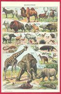 Mammifères, Mammifère, Animaux, Illustration Adolphe Millot, Larousse 1908 - Autres