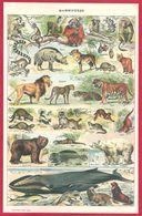 Mammifère, Animaux, Mammifères Marins, Illustration Adolphe Millot, Larousse 1908 - Autres