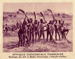 Chromo, Image, Vignette : Afrique Occidentale Française, Battage Du Blé à Bobo-Dioulasso, Haute-Volta (6 Cm Sur 7 Cm) - Unclassified