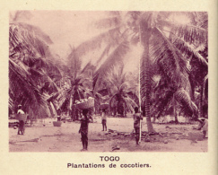 Chromo, Image, Vignette : Togo, Plantations De Cocotiers (6 Cm Sur 7 Cm) - Unclassified