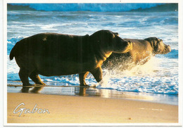 Hippopotames Sur La Plage Au Cap Lopez Du Gabon,  Carte Postale écrite Au Verso - Hippopotames