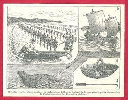 Moulière, Exploitation Bateau Traînant La Drague, Panier à Moules, Pêchoir, Larousse 1908 - Old Paper