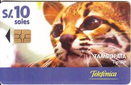 PERU - Puma, Tambopata/Tigrillo, Telefonica Telecard, Chip GEM3.3, Tirage %50000, 11/00, Used - Peru