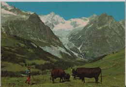 Valais - Paturages Au Val Ferret - Kühe Vaches - VS Wallis
