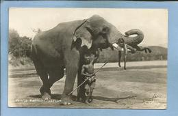 Ceylon (Sri Lanka) Temple Elephant With His Cornacs 2 Scans 1951 Nice Stamps By Air Mail - Sri Lanka (Ceylon)