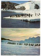 CPM   T A A F  TERRES AUSTRALES   MANCHOTS ADELIE  ET EMPEREURS EXPEDITION FRANCAISE 1988 1989 - TAAF : Terres Australes Antarctiques Françaises