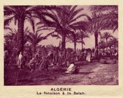 Chromo, Image, Vignette : Algérie, La Fenaison à In Salah (6 Cm Sur 7 Cm) - Unclassified