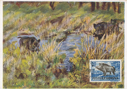 D35031 CARTE MAXIMUM CARD RR 1956 ROMANIA - WILD BOAR SANGLIER WILDSCHWEIN CP ORIGINAL - Game