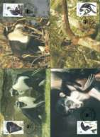 Ghana 1994 Monkeys 4x Maxicards FDC Lot51445 - Ghana (1957-...)