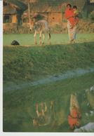 459-Folklore-Usi E Costumi-Bambini-Madri-Animali-Bue-Bangladesch - Asia