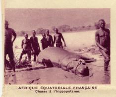 Chromo, Image, Vignette : Afrique Equatoriale Française, Chasse à L'hippopotame (6 Cm Sur 7 Cm) - Unclassified